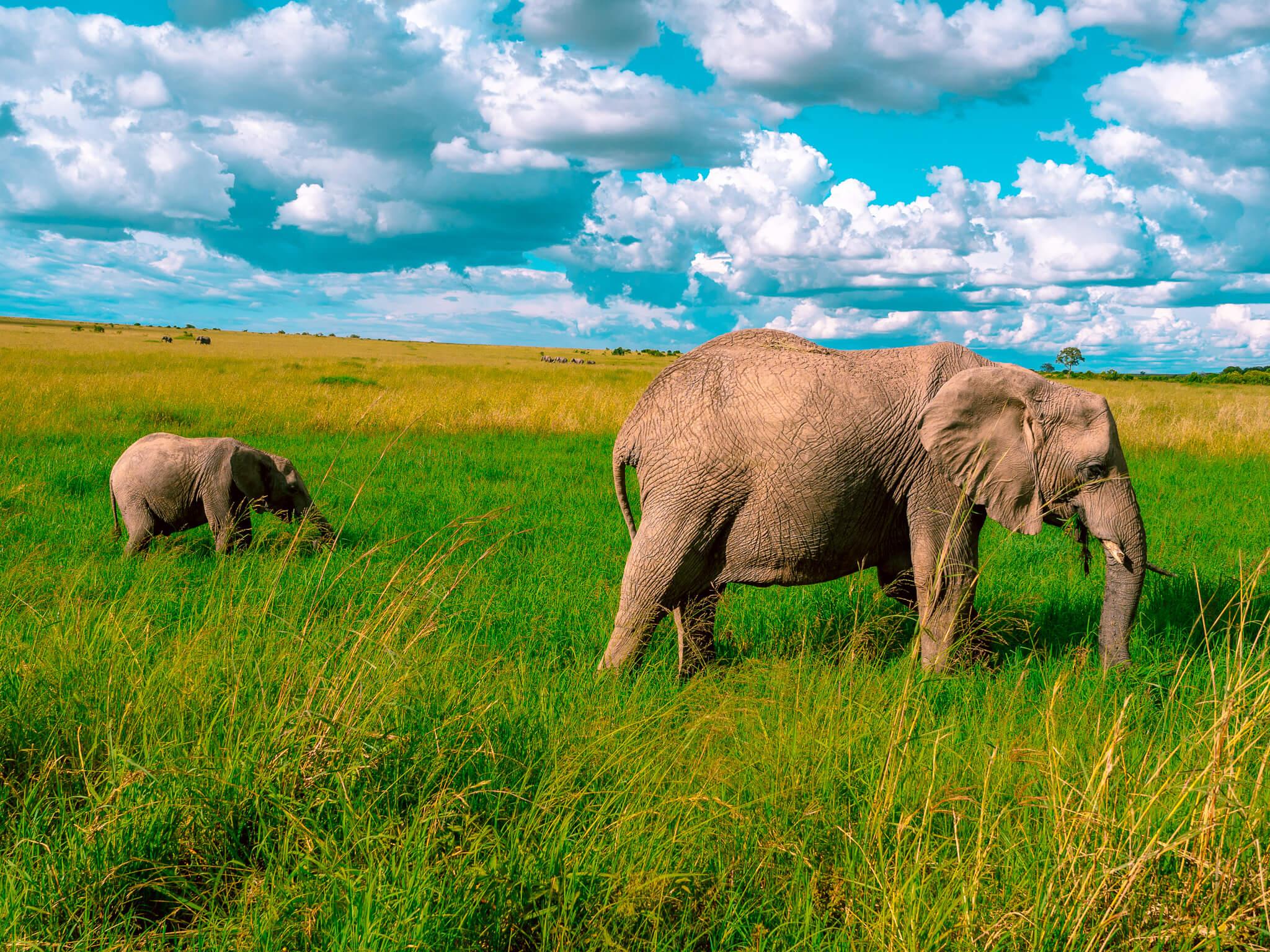 masai mara norsu