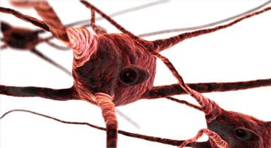 myelin sheath nerves