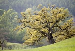La gestion du stress et les ancêtres
