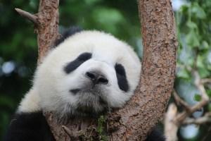 Les dangers du manque de sommeil