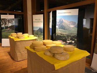 Il miglior formaggio di malga della montagna friulana