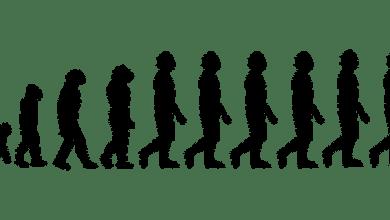 evolution credit Pixabay