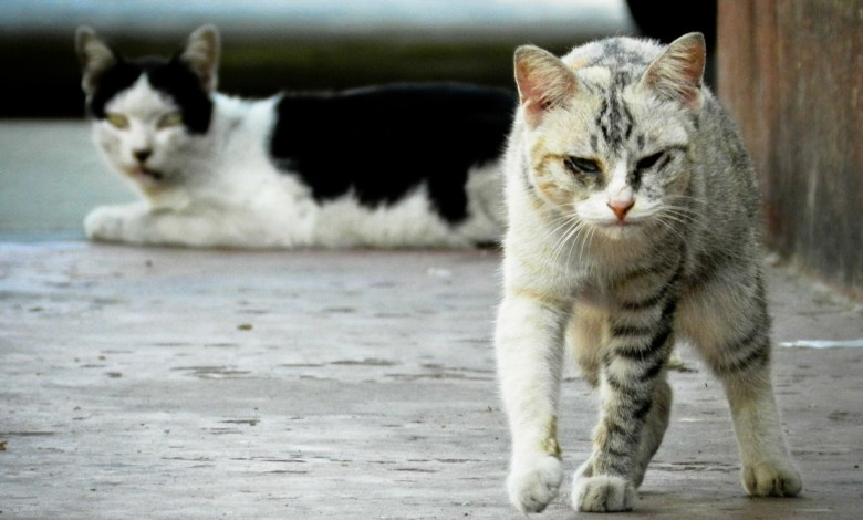 Photo of A Lozzolo continua la prevenzione di colonie feline randagie
