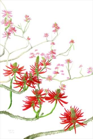 4 Margherita Leoni, Erythrina speciosa, acquerello su carta, 2014