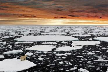 Marco Gaiotti, Un solitario orso polare nell_Artico