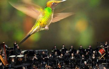 UNSER BLAUER PLANET II,#Musik,#Berlin,Konzert,Freizeit,Unterhaltung,LIVE IN CONCERT,#VisitBerlin