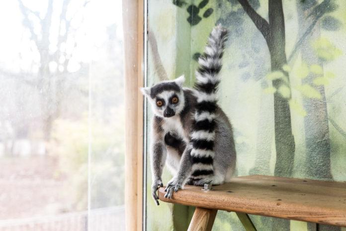 Tierpark Berlin,#Katta,#Tiere,Freizeit,Unterhaltung,