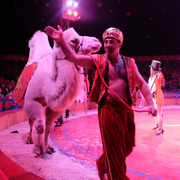 Circus William Show,Berlin,Williams Weihnachtscircus,EventNews