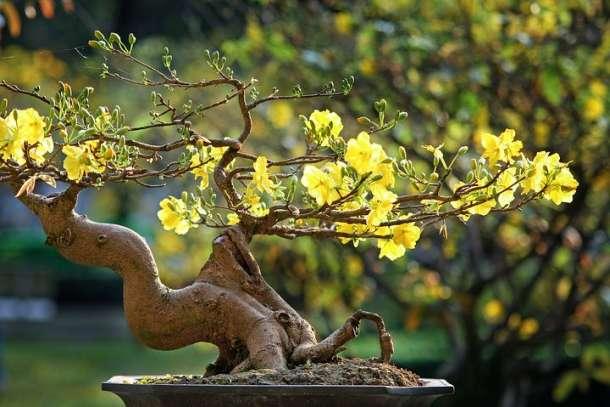 Chinesischen Garten,Berlin,Gärten der Welt ,EventNewsBerlin