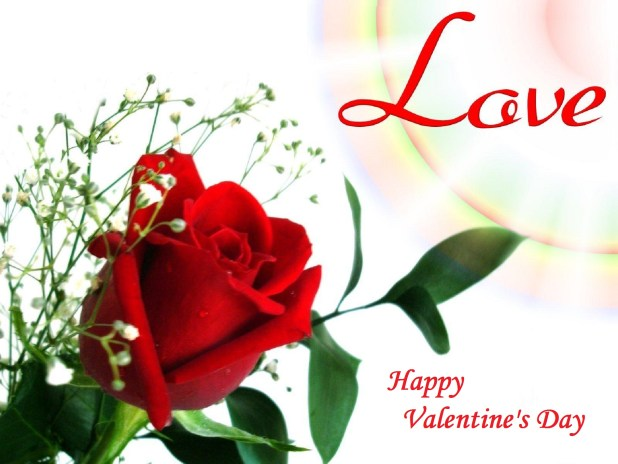 lovely  beautiful valentine images  wallpapers   events today, Beautiful flower