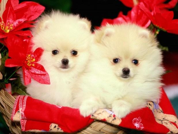 cute dog images hd 2017