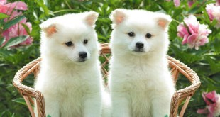 white cute dog images 2017