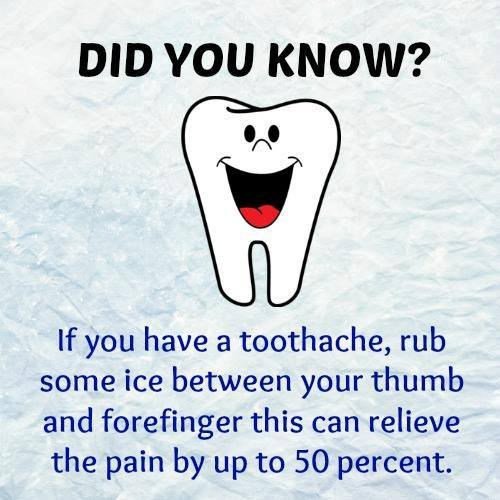 Tooth facts image
