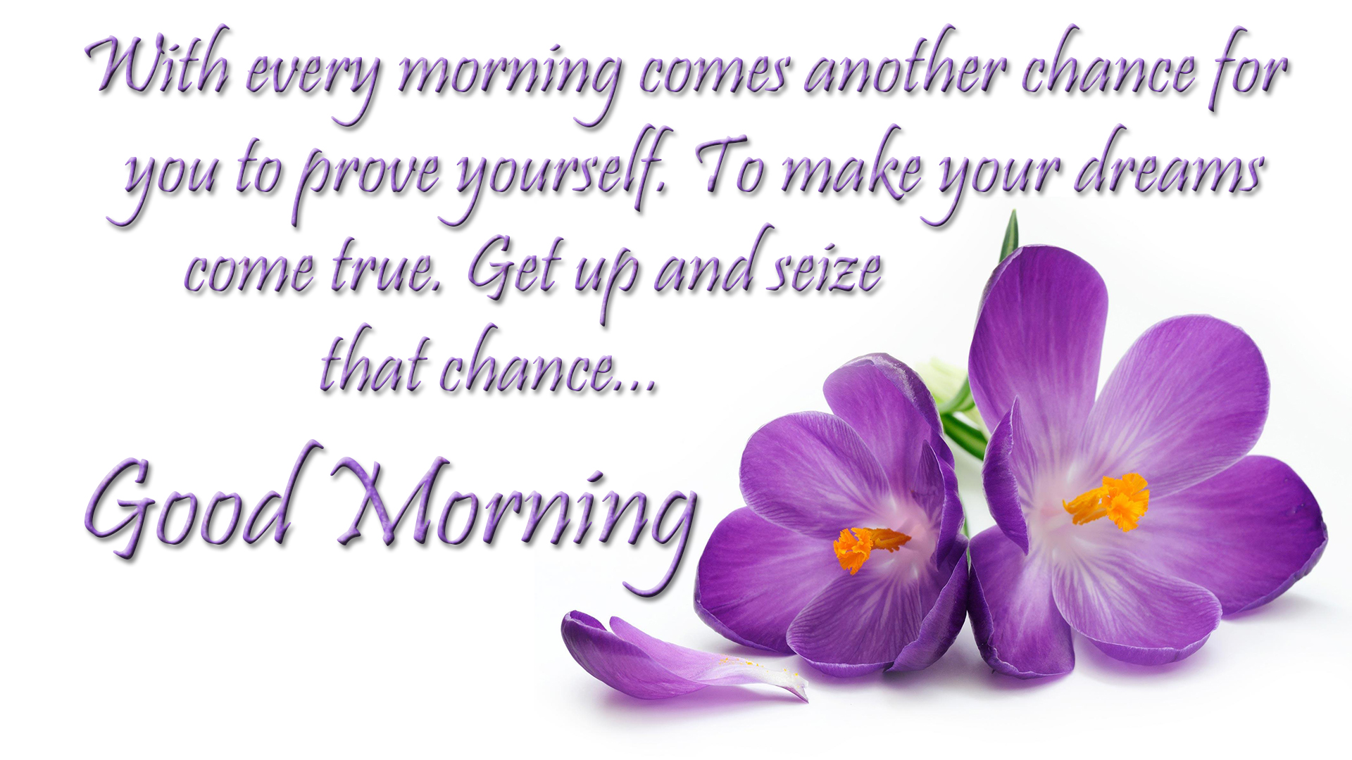 Morning Quotes Wishes Images Good Morning Greetings