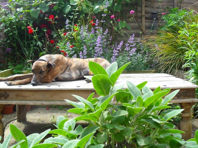 Everchanging Garden Design Hertfordshire Small Courtyard