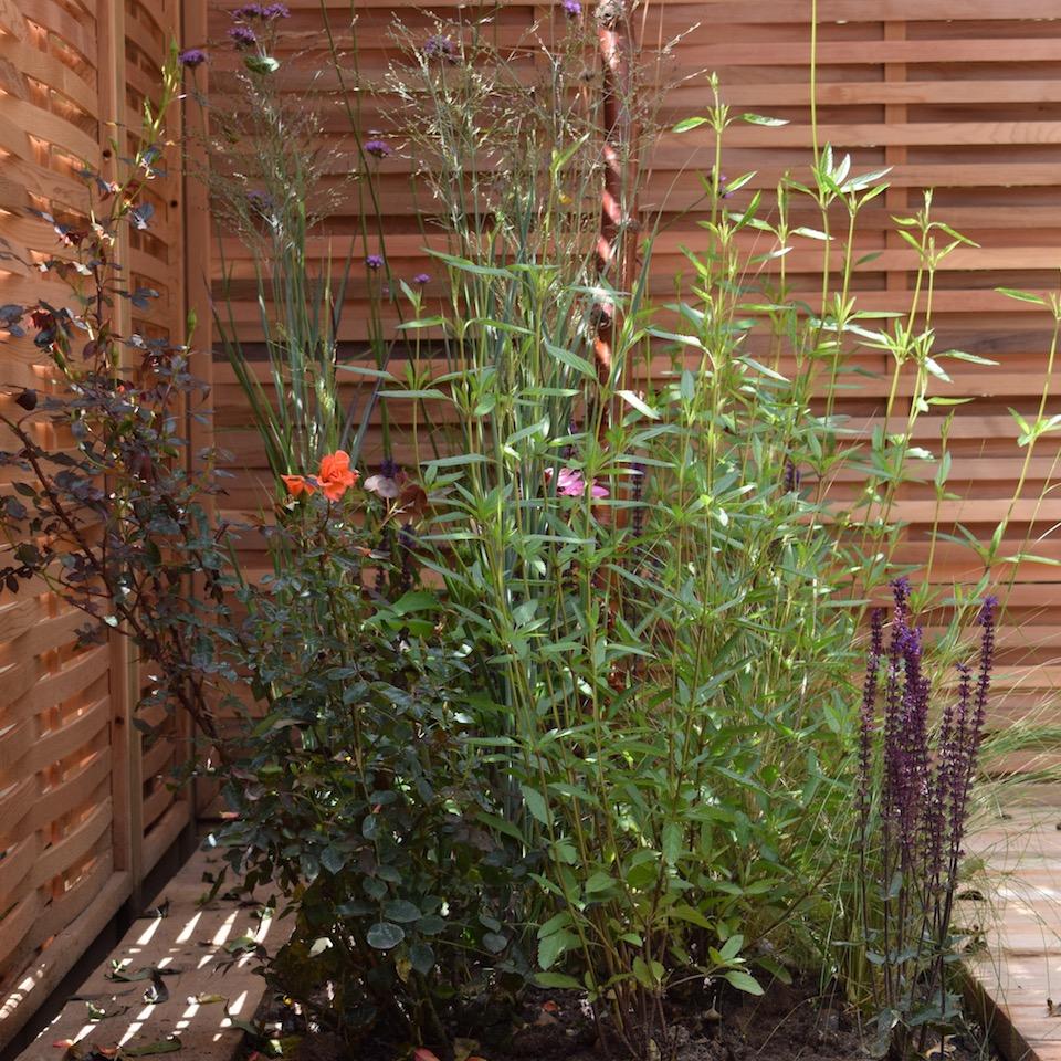 Everchanging Garden Design in Hertfordshire and North London ...