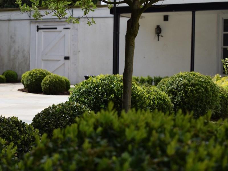 everchanging-garden-design-hertfordshire-hadley-wood-buxus-balls