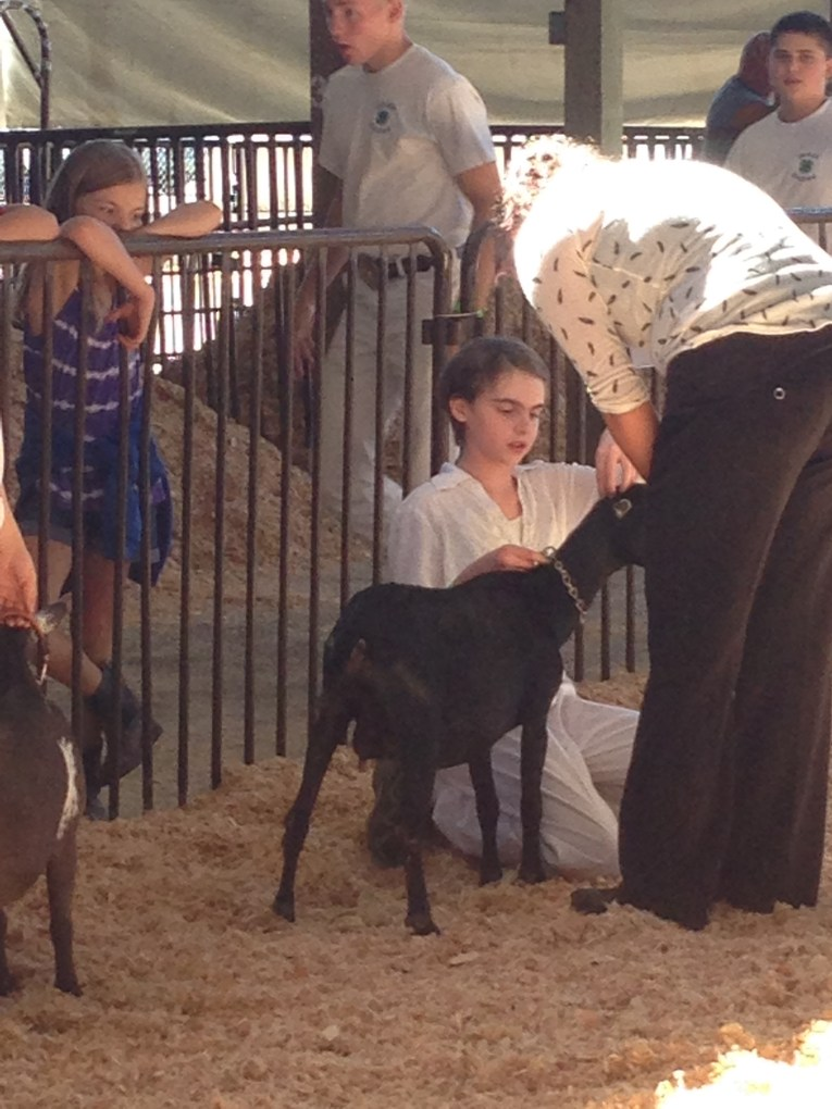 Olga answers the judges questions during the 4-H Junior Showmanship class at the 2015 Benton County Fair.