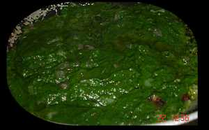 palak paste fried