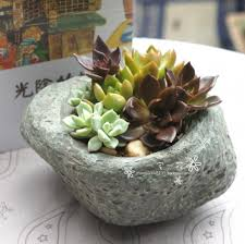 table-cactii14
