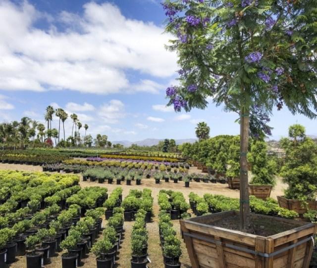 Evergreen Nursery San Diegos Largest Wholesale Nursery Open To The Public