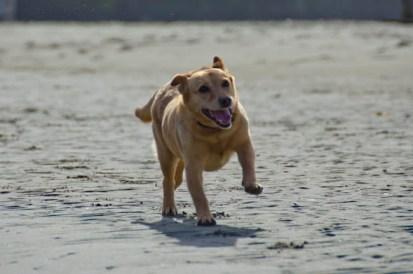 dog-friendly mendocino