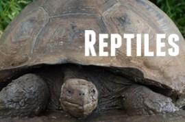 Guide to Galapagos Reptiles