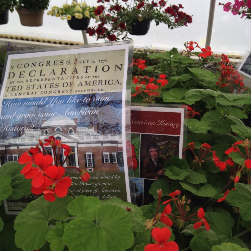 Historic geraniums for sale.
