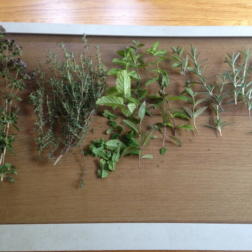 Make shift herb drying rack!