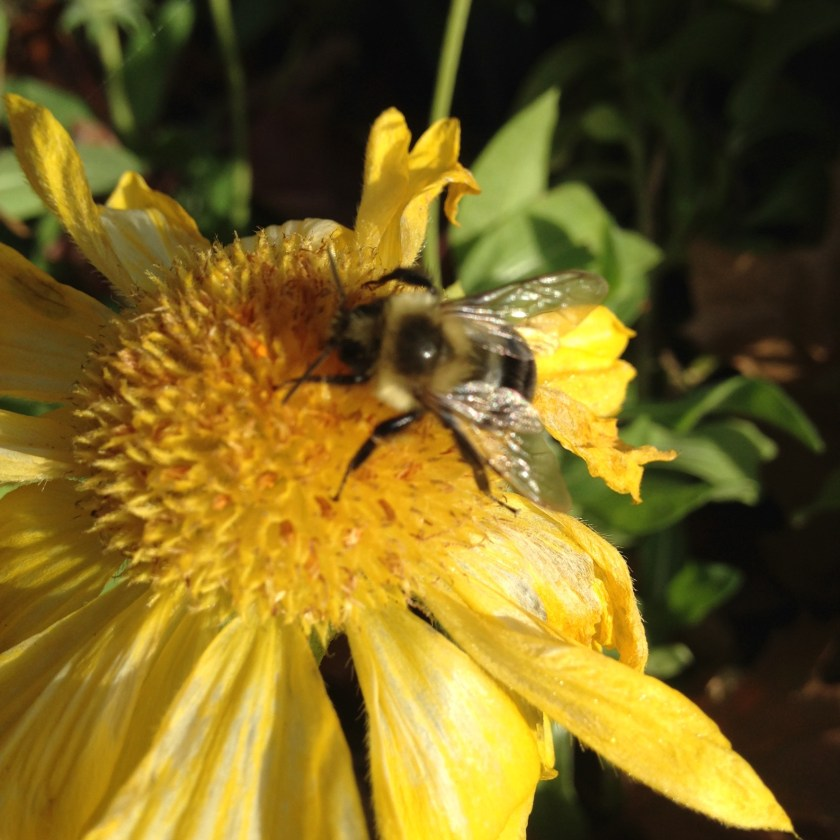 Leaving flowers can provide food for the bees!