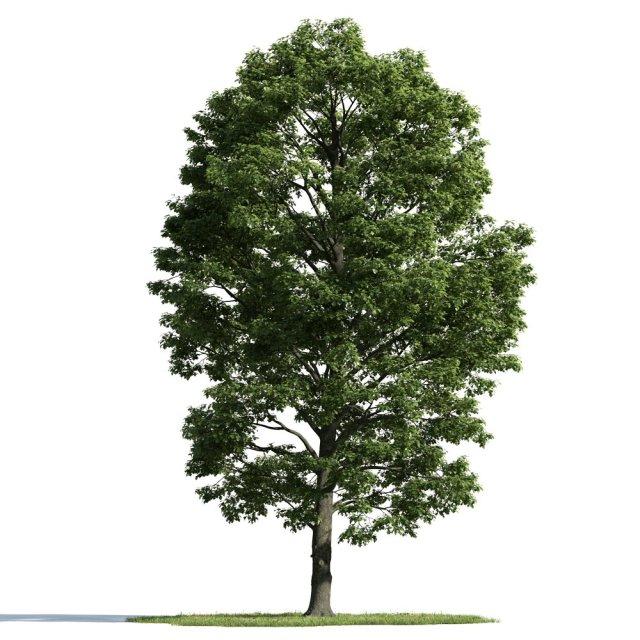 evermotion_tree