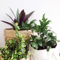 Pot plant goodness.  Pots from @bedbathandbeyond_nz #theguisehome