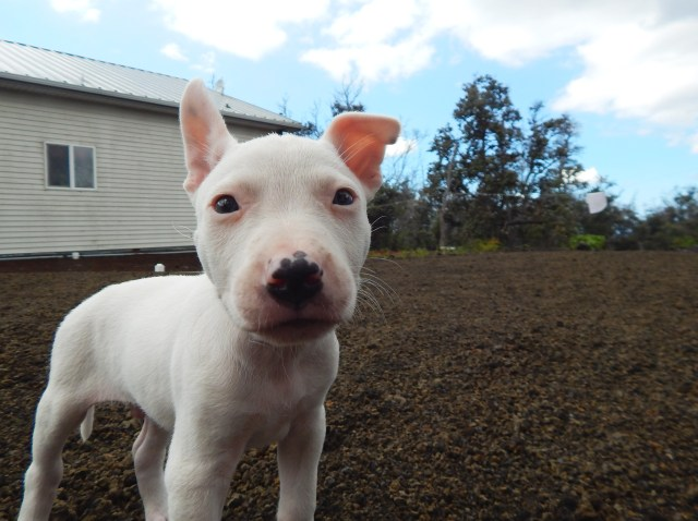Pup from Na'alehu - The Every Animal Project