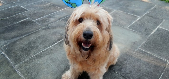 Teddy - Wags 4 Hope - The Every Animal Project