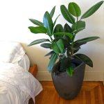 Welche Pflanzen Sind Fur Das Schlafzimmer Geeignet