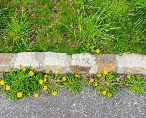 weeds-grow-anywhere-even-in-asphalt