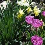 Cheapskate Gardening Tips, Tricks and Recipes