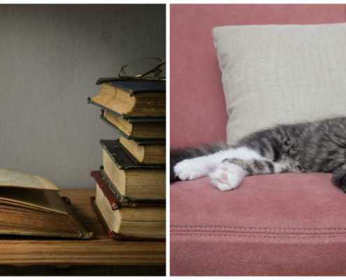 Smelly old books and pet odors