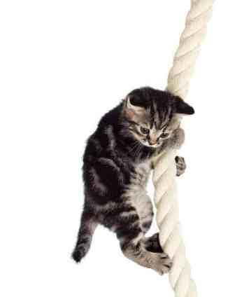 cat on a rope