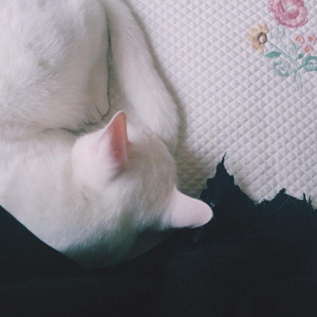 Pink ears #ilovemycat #kitten