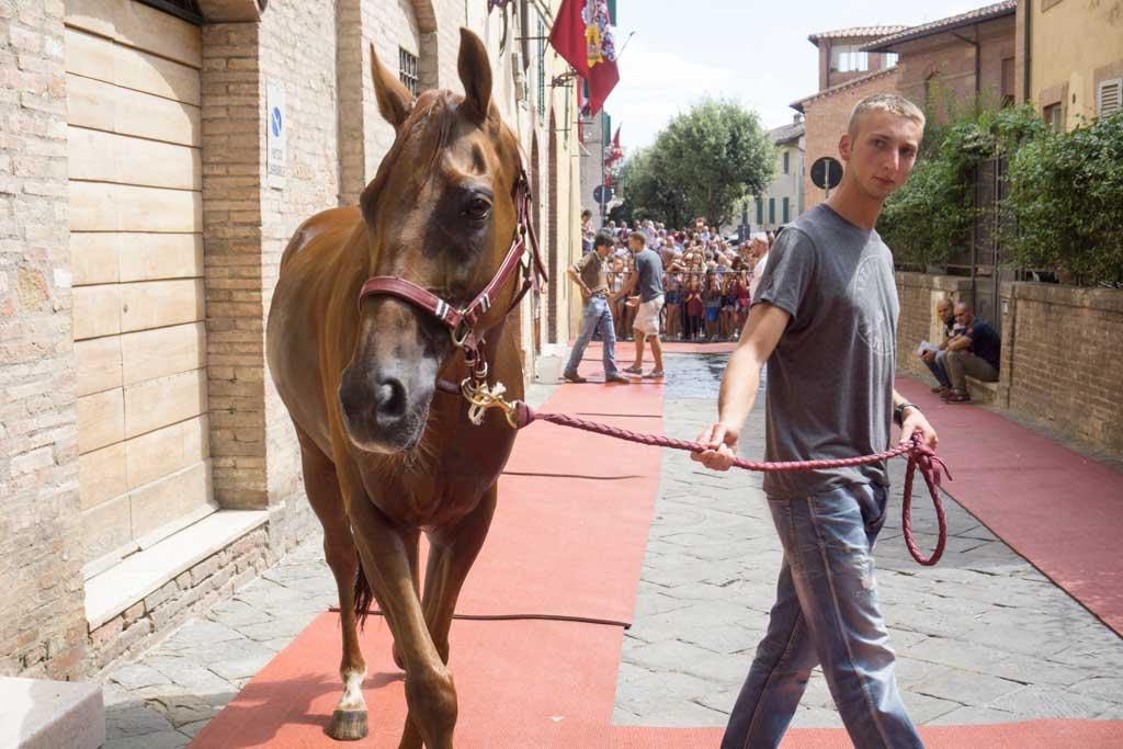 Palio di Siena cavallo di contrada