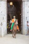 Palio di Siena cavallo