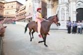 Palio di Siena cavallo in corsa montone
