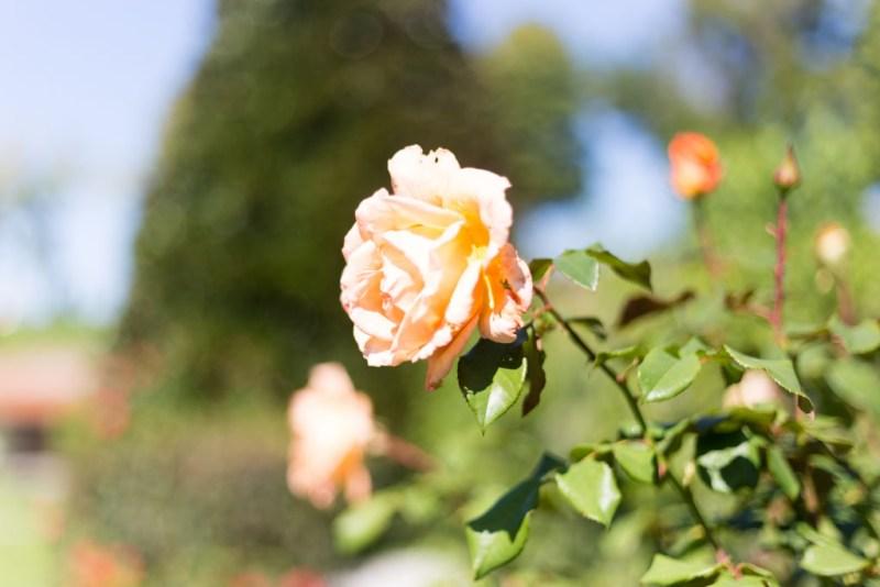 fiori palazzo pfanner