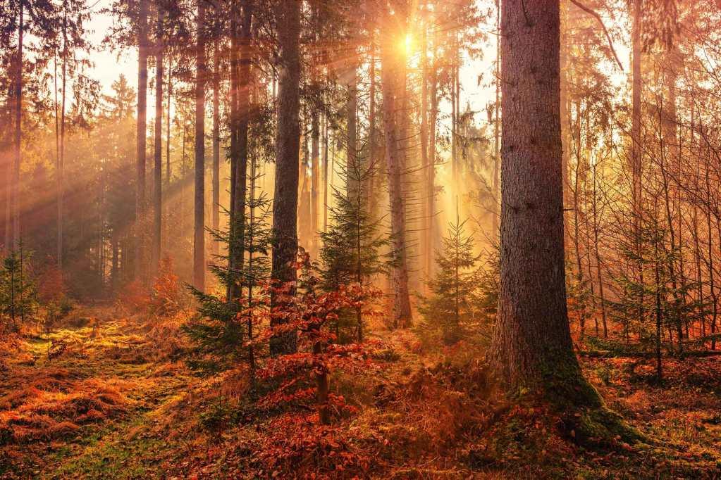 dove-fare-foto-in-autunno