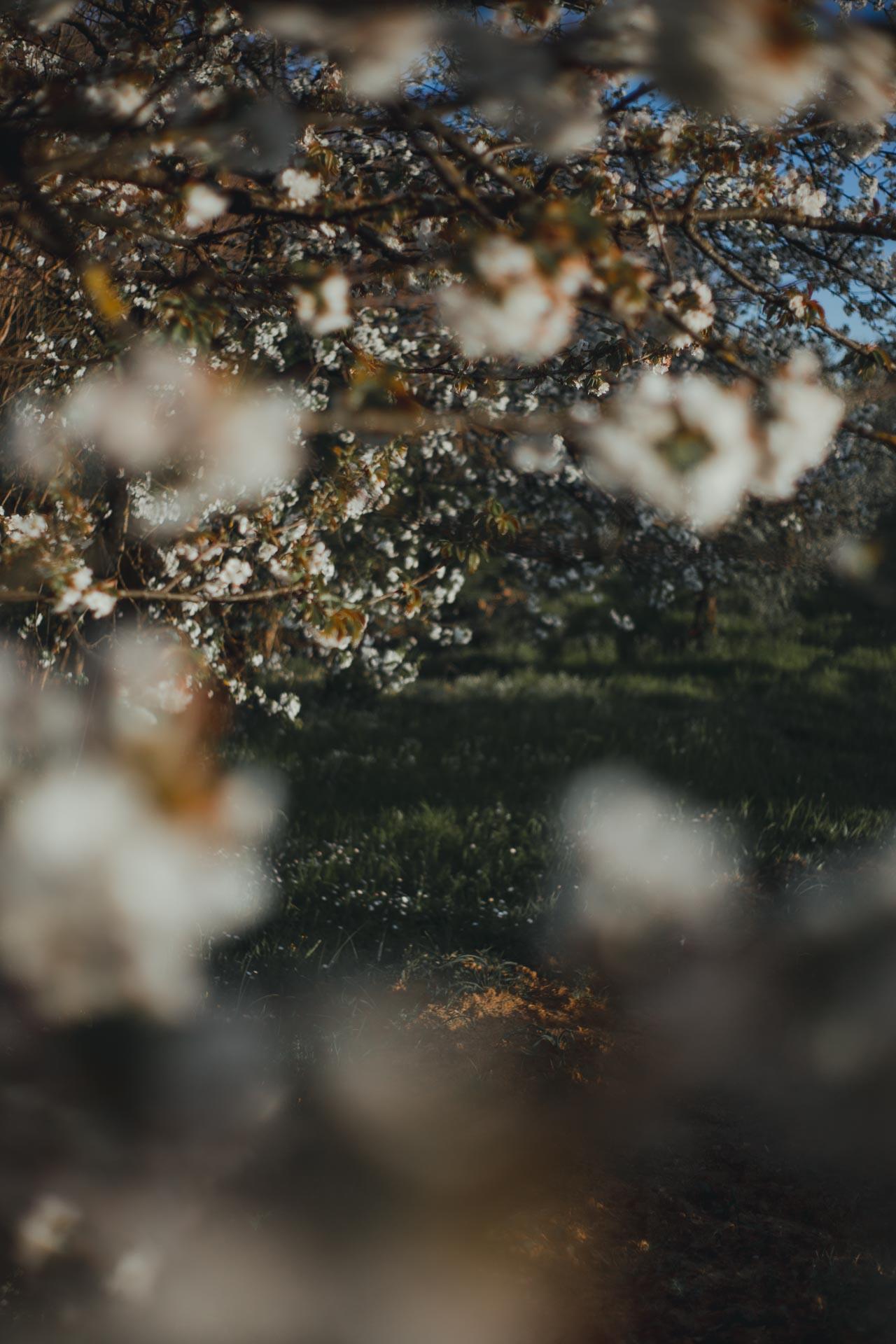 Ispirazioni foto per la primavera