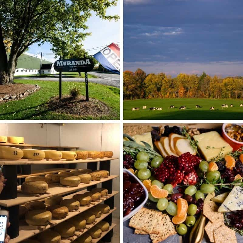 A collage of photos of the #NYDairyTour2018 at Murada Cheese Company