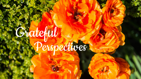 grateful perspectives