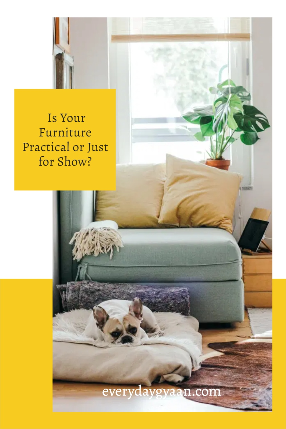 Is Your Furniture Practical or Just for Show?
