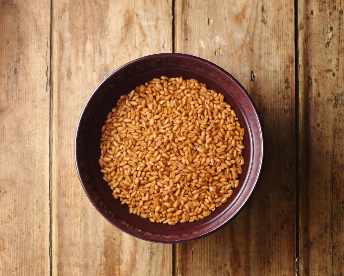 Wheat berries with water in purple bowl.